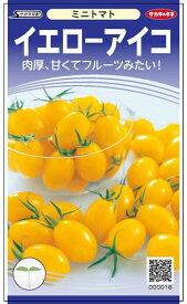 ミニトマト 種 『イエローアイコ』 小袋(採苗本数11本) サカタのタネ