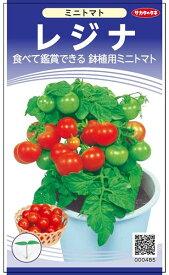 ミニトマト 種 『レジナ(鉢植え用)』 小袋(採苗本数65本) サカタのタネ