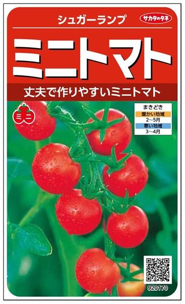 ミニトマト 種 『シュガーランプ』 小袋(採苗本数80本) サカタのタネ