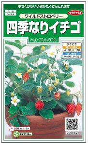 四季なりイチゴ 種 『ワイルドストロベリー』 サカタのタネ/小袋(採苗本数100本)