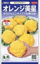 オレンジカリフラワー 種 『オレンジ美星』 2000粒 サカタのタネ