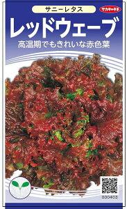 サニーレタス 種 『レッドウェーブ』 サカタのタネ/小袋(採苗本数830本)