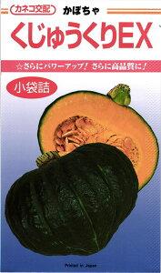 カボチャ 種 『くじゅうくりEX』 カネコ種苗/500粒