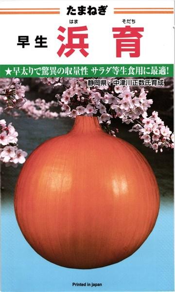早生タマネギ 種 『浜育』 小袋(3.0ml)カネコ種苗