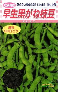 黒豆エダマメ 種 『早生黒がね枝豆』 小袋(30ml) 松永種苗