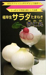 超極早生タマネギ 種 『杏仁丸』 小袋(4ml) 松永種苗