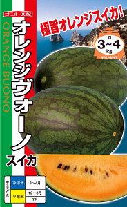 オレンジ楕円中玉スイカ 種 『オレンジヴォーノ』 200粒 ナント種苗