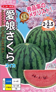 紅小玉スイカ 種 『愛娘さくら』 小袋(8粒) ナント種苗