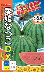 紅小玉スイカ 種 『愛娘なつこDX』 小袋(8粒) ナント種苗
