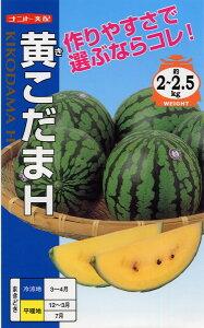 黄小玉スイカ 種 『黄こだまH』 小袋(8粒) ナント種苗