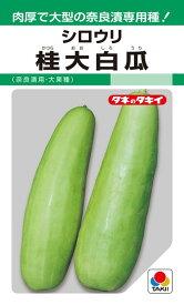 シロウリ 種 『桂大白瓜』 60粒(GF) タキイ種苗