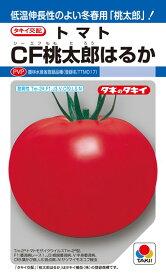トマト 種 『CF桃太郎はるか』 ペレット2L1000粒 タキイ種苗