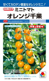 ミニトマト 種 『オレンジ千果』 18粒(DF) タキイ種苗