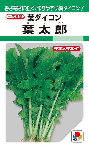 葉ダイコン 種 『葉太郎』 35ml(GF) タキイ種苗