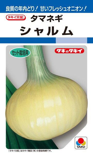 セット栽培用タマネギ 種 『シャルム』 20ml タキイ種苗