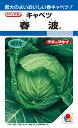春系及び春キャベツ 種 『春波』 ペレット小袋150粒 タキイ種苗