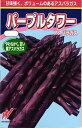 紫アスパラガス 種 『パープルタワー』 10粒(小袋) 渡辺農事