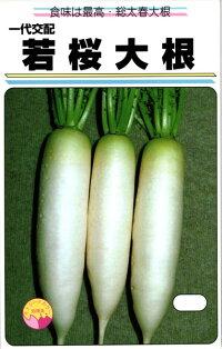 渡辺農事 ダイコン 大根 若桜 20ml