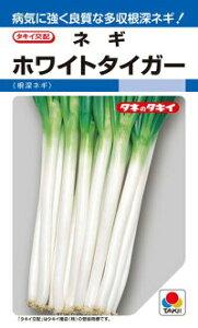 タキイ種苗 ネギ 葱 ホワイトタイガー 1dl