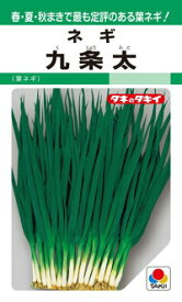 タキイ種苗 ネギ 葱 九条太 1dl