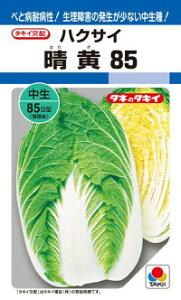 タキイ種苗 ハクサイ 白菜 晴黄85 DF