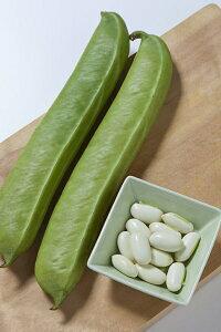 タキイ種苗 ナタマメ 白刀豆 1dl