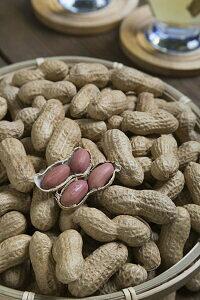 タキイ種苗 ピーナッツ 半立性落花生 1dl
