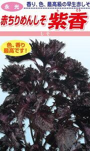 松永種苗 シソ 紫蘇 赤ちりめんしそ 紫香 小袋