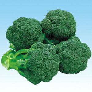 ナカハラのたね グリーンパレスブロッコリー 20ml