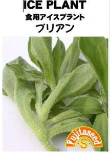 藤田種子 食用アイスプラント プリアン 小袋