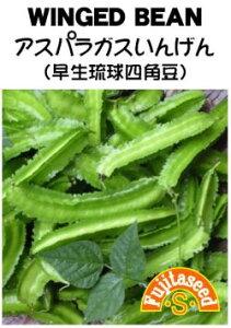 藤田種子 アスパラガスいんげん(早生琉球四角豆)小袋