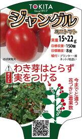 トキタ種苗 ミニトマト ジャングルトマト 小袋
