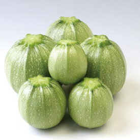 トキタ種苗 ズッキーニ パリーノ・オリーブ 小袋