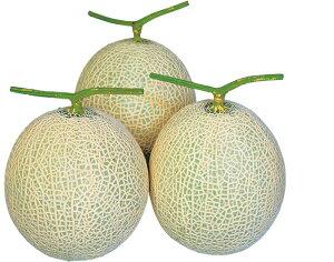 たね 大和農園 メロン 種子 アールスウィル 100粒