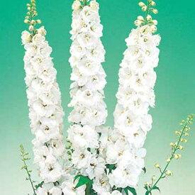 タキイ種苗 草花 種 デルフィニウム・F1オーロラ ホワイト