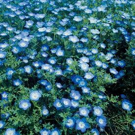 タキイ種苗 草花 種子 ネモフィラ・インシグニス ブルー