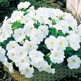 タキイ種苗 草花 種子 ペチュニア・F1ディーバ ホワイト