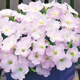 タキイ種苗 草花 種子 ペチュニア・F1ディーバ ラベンダーピンク