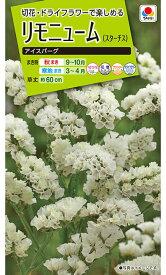 タキイ種苗 草花 種子 リモニューム(スターチス)・アイスバーグ