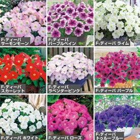 タキイ種苗 草花 種子 花 ペチュニア・F1ディーバ人気(花タネ) セット