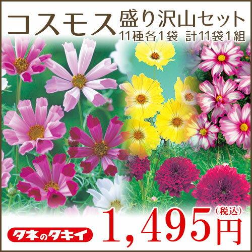 タキイ種苗 コスモス盛り沢山セット 11種