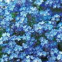 タキイ種苗 草花 種子 わすれな草・ドワーフブルー
