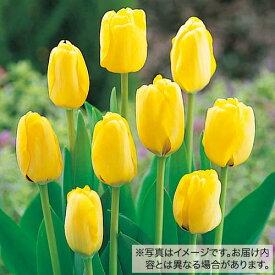 タキイ種苗 球根 チューリップ・50球詰め 黄色種