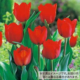 タキイ種苗 球根 チューリップ・50球詰め 赤色種