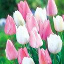 タキイ種苗 球根 チューリップ 早咲きファミリー ミックス