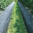 タキイ種苗 緑肥 芝草 種子 大麦(緑肥用) おたすけムギ 1袋(1kg)