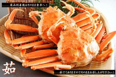 【せこガニ】【せこ蟹】【コッペ】【セイコガニ】【せこがに】【セコガニ】【コウバガニ】【コッペガニ】【蟹販売】【蟹通販】