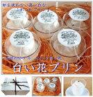 【水辺のホテル小さな白い花】【白い花プリン】京都ご当地プリン・LITTELEWHITEFLOWER・ぷりん・白いプリン