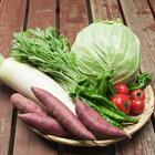 【丹後の旬】長寿もぎたて新鮮京野菜BOX(6種)