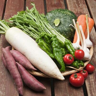 【丹後の旬】長寿もぎたて新鮮京野菜BOX(8種)